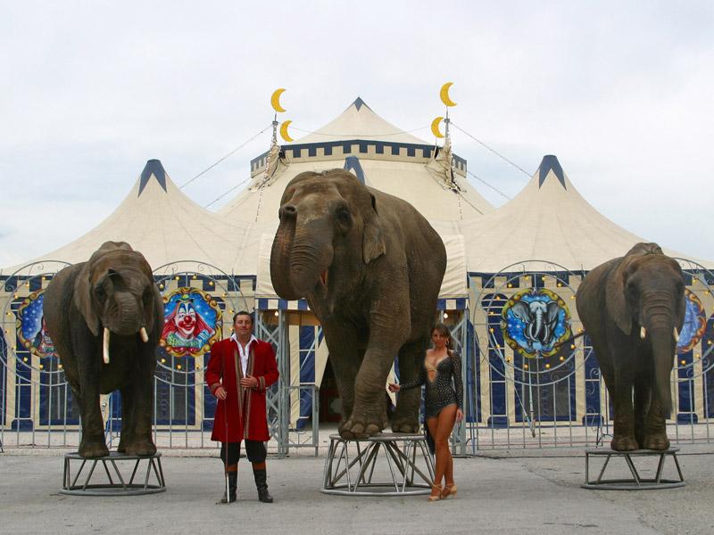 Circus Carl Busch Eintrittspreise